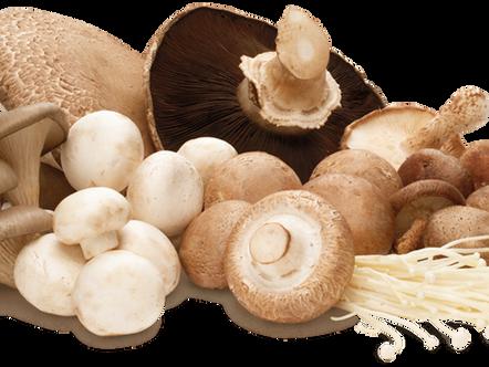 Conhece os benefícios dos cogumelos?