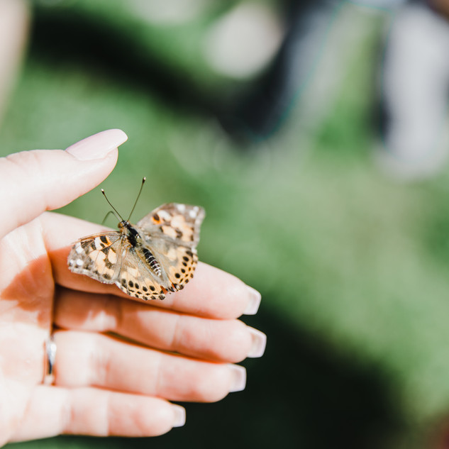 holding a butterfly.jpg