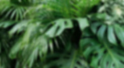 shutterstock_1108898990-background.jpg