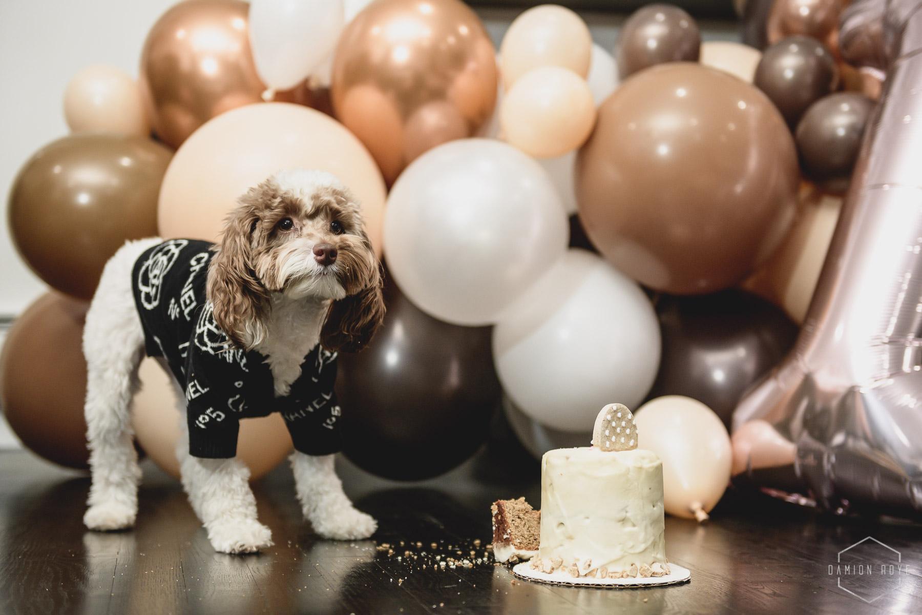 Storm's 1st Birthday Pawty