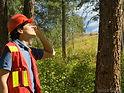 tree worker.jpg