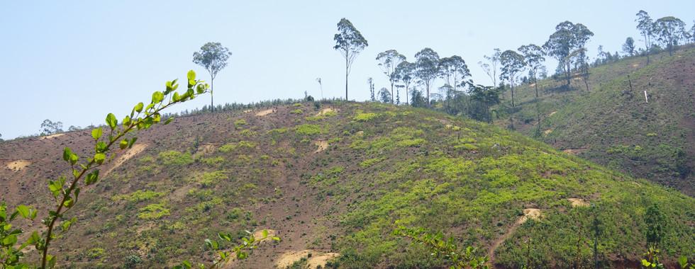 Bare Hillside.jpg