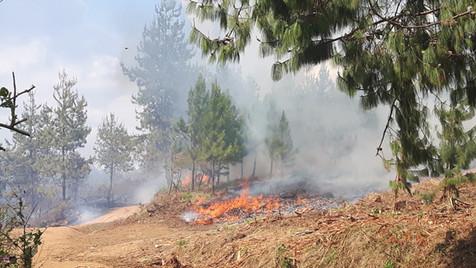 Fires, fires!!
