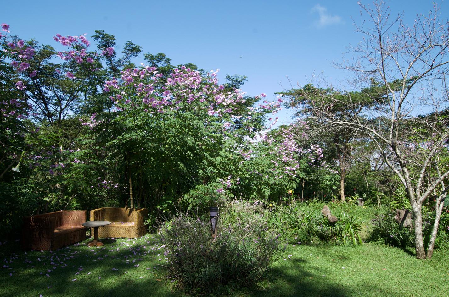ZFL garden in flower.jpg