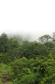 Trees In cloud.jpg