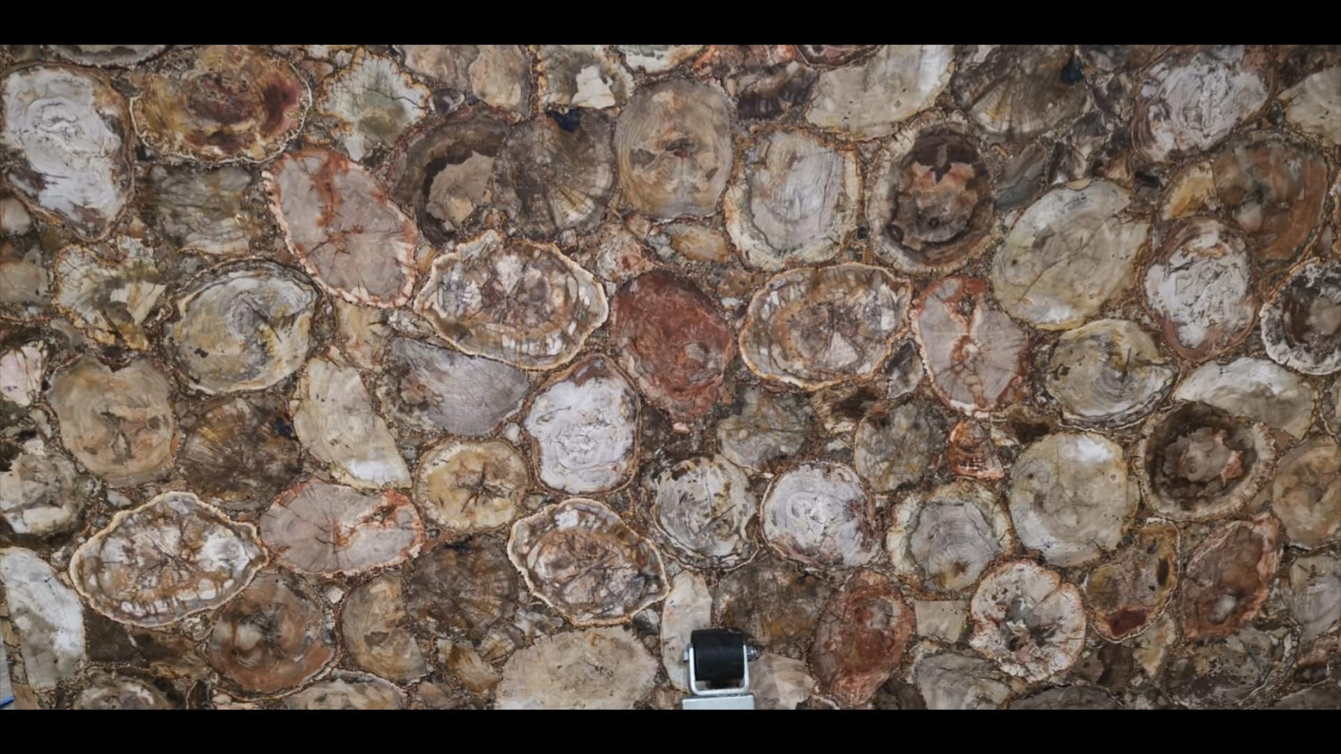 Fossiled Wood Gemstone