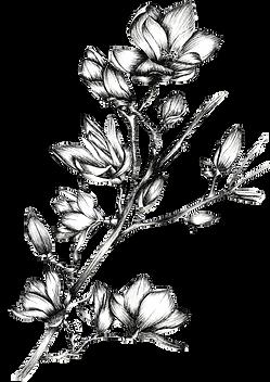flor.png