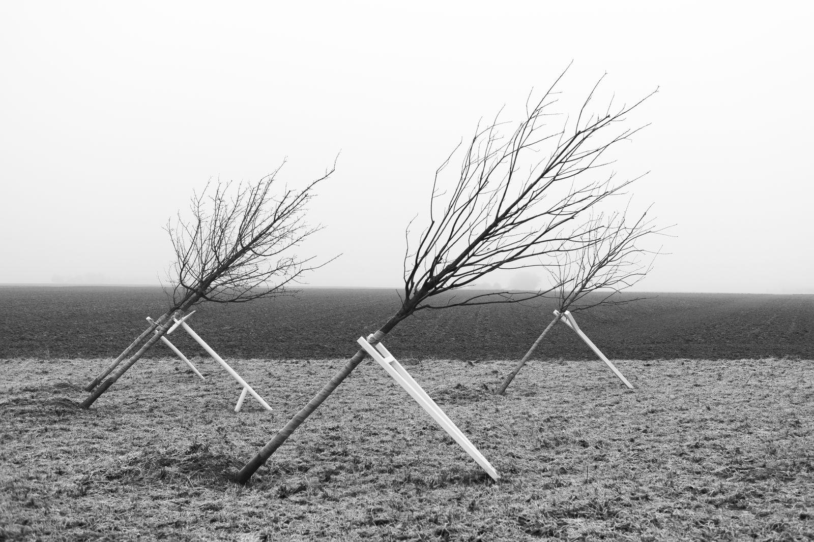 schiefe Bäume