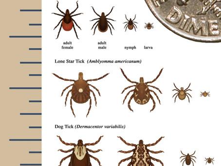 Safe & Natural Tick Prevention