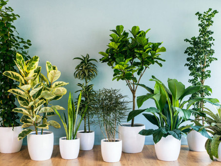 The power of plants: in the Home.