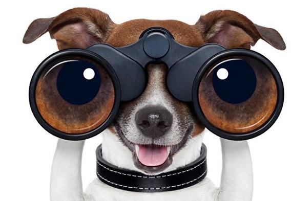 Hund mit Fernglas.png
