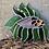 Thumbnail: דג ויטראז׳