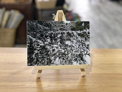 צילום שלג