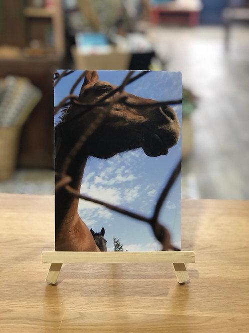 צילום סוס