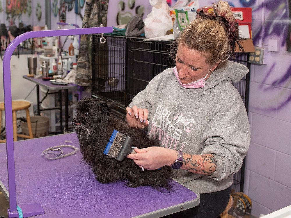 bow wow employee grooming a dog