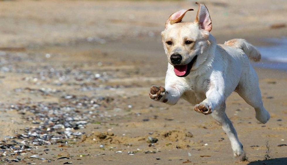 dog at beach.jpeg