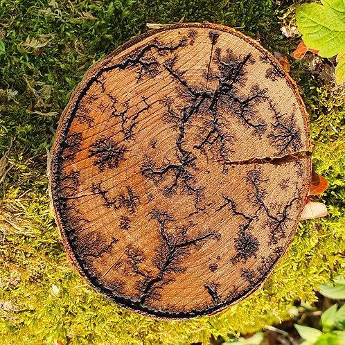 Bois arborescent ® - bouleau