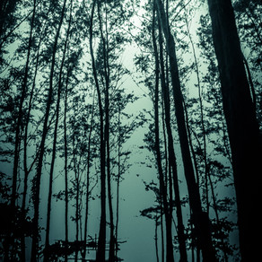 [ a forest, in that sense, is like a wooden casket ] - Sanjana Nair