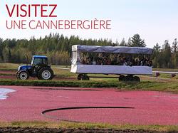 PRODUCTION DE CANNEBERGIERE QUÉBEC