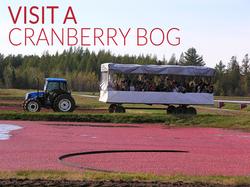 VISIT a cranberry bog