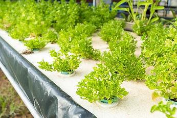 vegetable-plant-aquaponics-system-fresh-