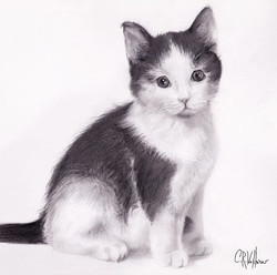 Oreo the kitten!  Commissioned #KittenPortrait. Graphite on Bristol board. 11x14 _craigwerk_myartwer
