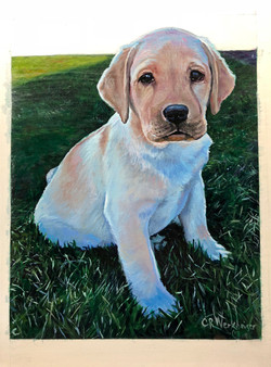 Puppy Dog Pet Portrait Acrylic p