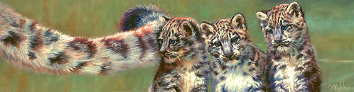 """Trio of Snow Leopards"" Pastel painting on board Framed 19""x13.5"""