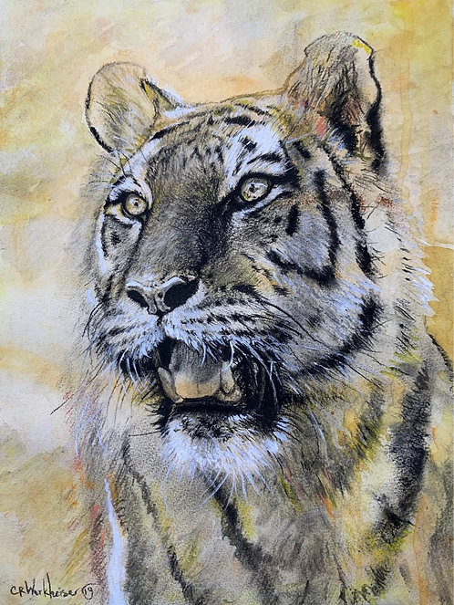 """Tiger"" Charcoal on salted Watercolor background 12""x16"" on paper."