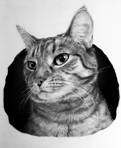 Cat Pet Portrait Graphite