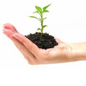 Grow your own Scrum Masters