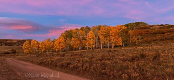 Fall colors, sunset