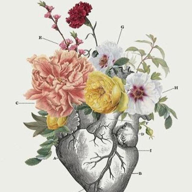 Alquimia y Cariño. Sistema Circulatorio