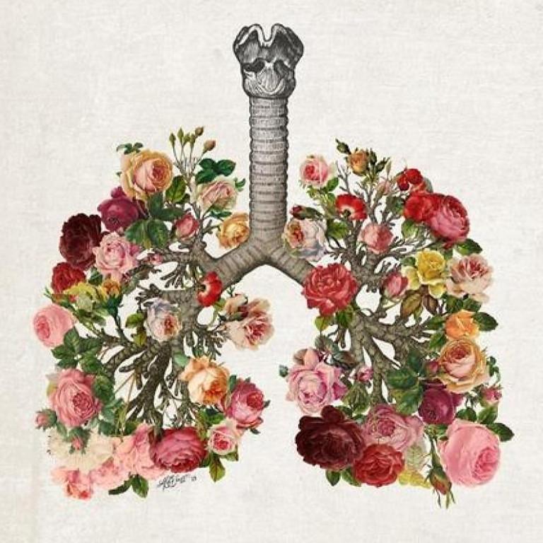 Alquimia y Cariño. Sistema Respiratorio