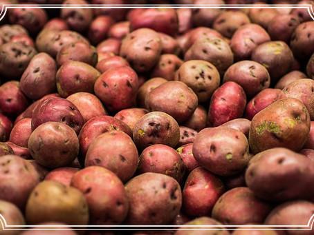 Kartoffeln ohne Ende