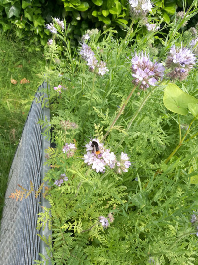 Garten Biene.jpeg
