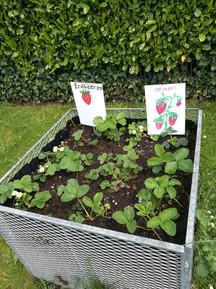 Garten 1 (1).jpeg