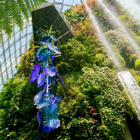 An Interplay and Movement of Colour and Light by incredible glass sculptures, Dale Chihuly
