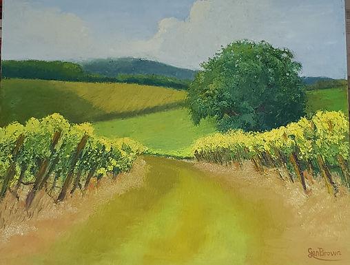 Vineyard Walk