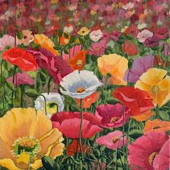 Poppy Field by Alana Dunlevy
