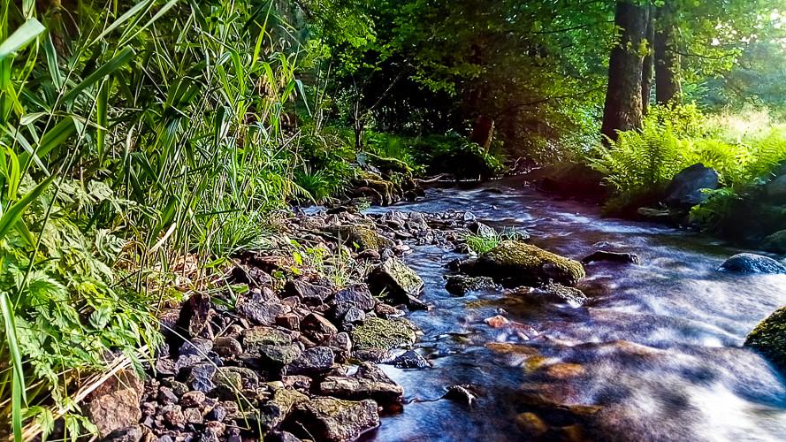 rivière qui passe dans la forêt