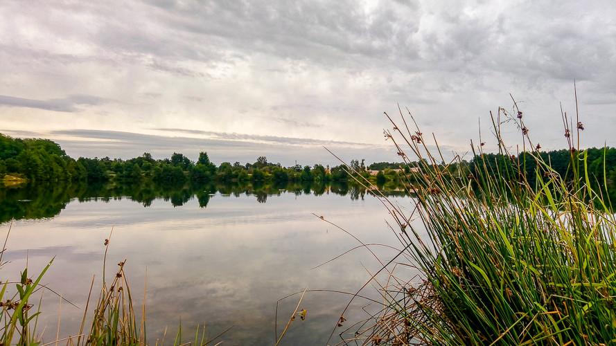 étang et touffes d'herbes sous un beau ciel nuageux