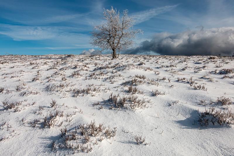 arbre solitaire dans un champ enneigé