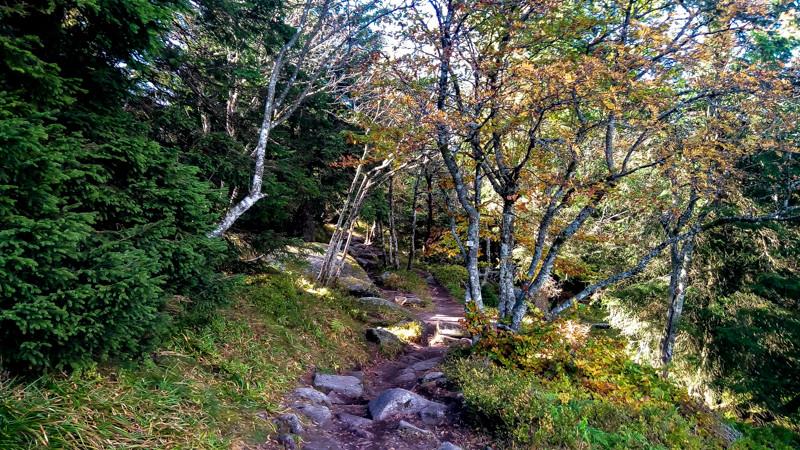 sentier pédestre et boisé en milieu semi-montagneux