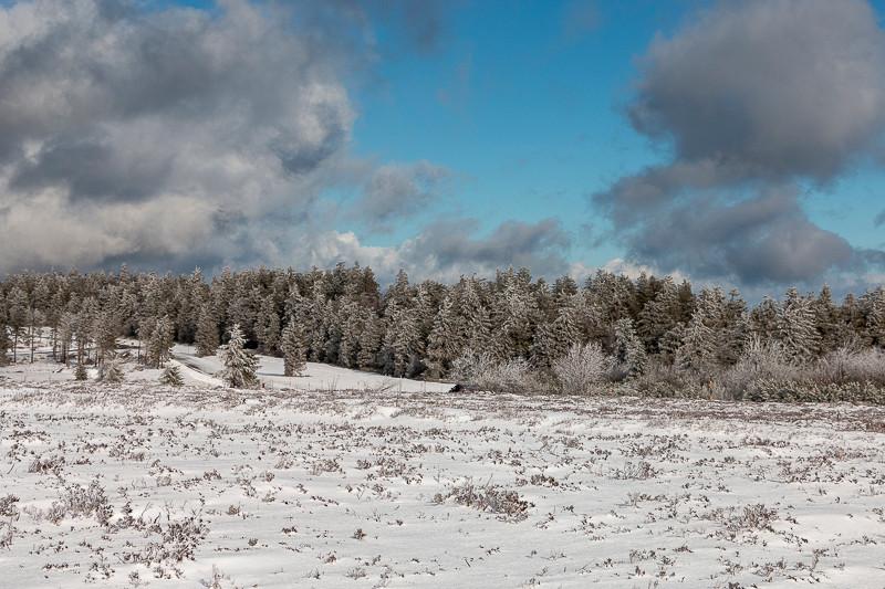 champ et forêt en hiver