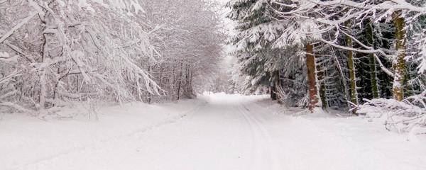 sentier et forêt sous la neige