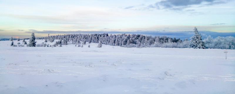 prairie et sapins sous la neige