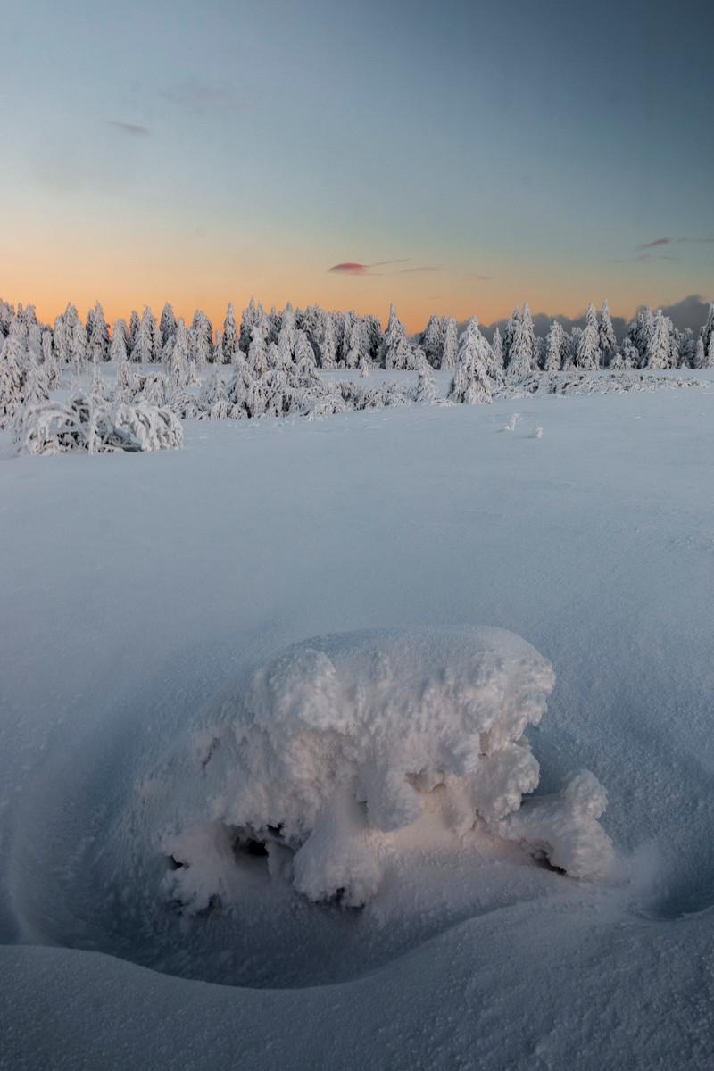 monticule gelé dans une clairière enneigé avec une sapinière en arrière-plan