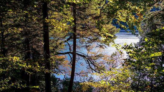 sous-bois ombragé au bord du lac