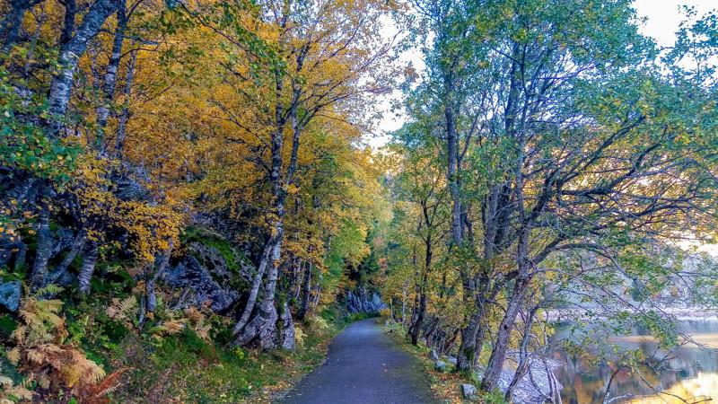chemin entre les erbres aux feuilles jaunies, au bord du lac